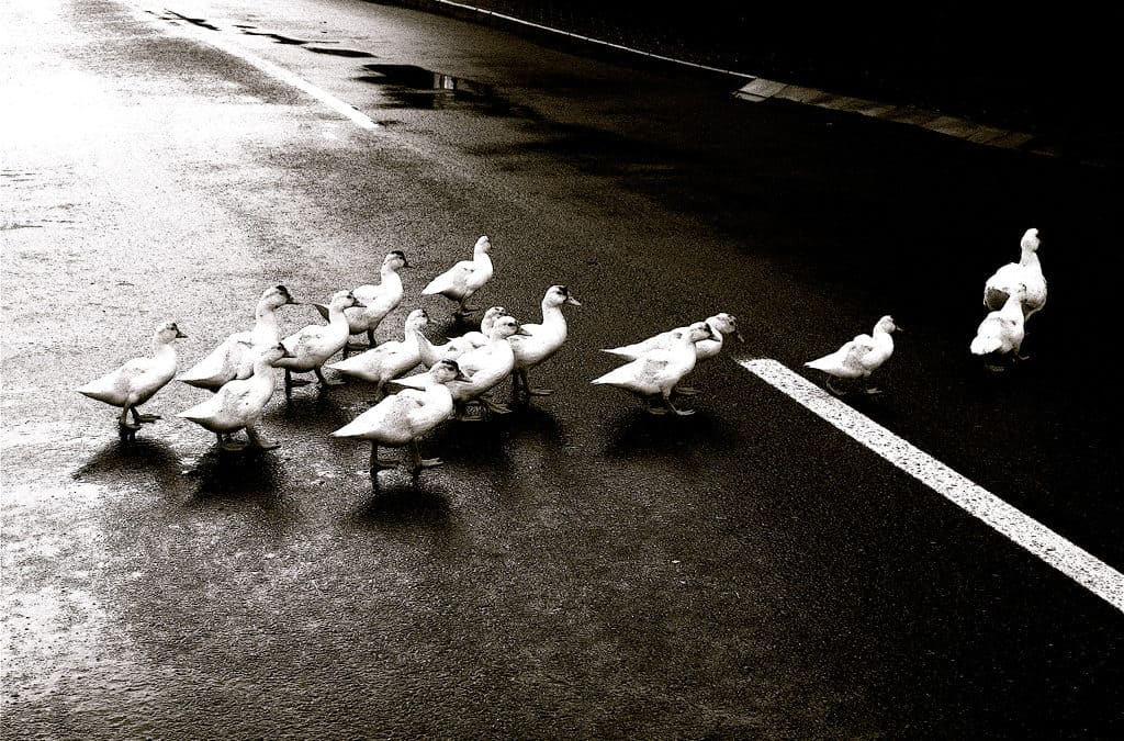 Bad Followership: Resisting Good Leadership